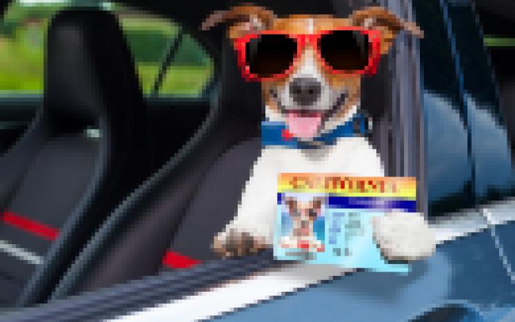 Pet Licensing